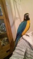 Macaw Birds for sale in Garden Grove, CA, USA. price: NA