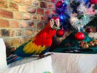 Macaw Birds for sale in Brownsville, TX, USA. price: NA