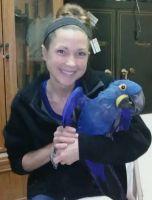 Macaw Birds for sale in Bergen Turnpike, Ridgefield, NJ 07657, USA. price: NA