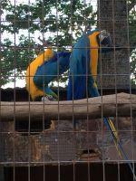 Macaw Birds for sale in Shreveport, LA, USA. price: NA