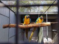 Macaw Birds for sale in Dallas, TX 75204, USA. price: NA