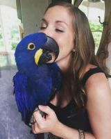 Macaw Birds for sale in CA-1, Mill Valley, CA, USA. price: NA