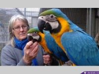 Macaw Birds for sale in Toronto, OH 43964, USA. price: NA