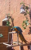 Macaw Birds for sale in Texas City, TX, USA. price: NA