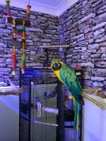 Macaw Birds for sale in Louisville, KY, USA. price: NA