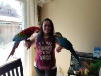 Macaw Birds for sale in California, KY, USA. price: NA