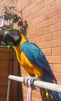 Macaw Birds for sale in Hartford, CT 06143, USA. price: NA