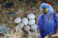 Macaw Birds for sale in Los Angeles, CA 90012, USA. price: NA