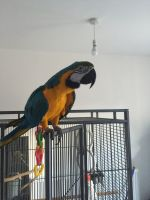 Macaw Birds for sale in IL-59, Antioch, IL, USA. price: NA