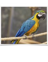 Macaw Birds for sale in Vancouver, WA, USA. price: NA