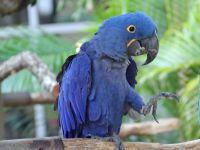 Macaw Birds for sale in Puerto Rico Ave NE, Washington, DC 20017, USA. price: NA