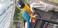 Macaw Birds for sale in New York, NY 10043, USA. price: NA