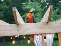 Macaw Birds for sale in Bridgewater Township, NJ, USA. price: NA