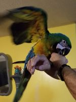 Macaw Birds for sale in Columbus, OH, USA. price: NA