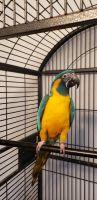 Macaw Birds for sale in Lady Lake, FL, USA. price: NA