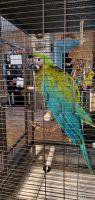Macaw Birds for sale in Okeechobee, FL, USA. price: NA