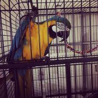 Macaw Birds for sale in Palm Bay, FL 32907, USA. price: NA