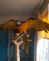 Macaw Birds for sale in Anaheim, CA, USA. price: NA