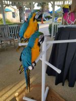 Macaw Birds for sale in 3801 E Willow St, Long Beach, CA 90815, USA. price: NA