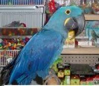 Macaw Birds for sale in Austin, TX, USA. price: NA