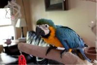 Macaw Birds for sale in Colchester, VT 05446, USA. price: NA