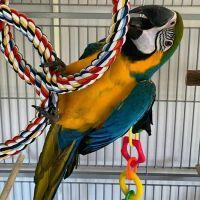 Macaw Birds for sale in Marfa, TX 79843, USA. price: NA