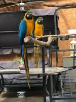Macaw Birds for sale in Boise, ID, USA. price: NA