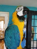 Macaw Birds Photos