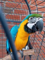 Macaw Birds for sale in 26347 State Hwy 76, Cassville, MO 65625, USA. price: NA
