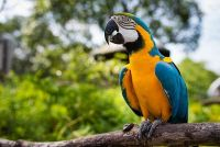 Macaw Birds for sale in Clifton Ave, Clifton, NJ, USA. price: NA