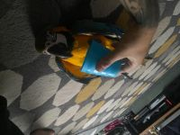 Macaw Birds for sale in Chapel Hill, NC, USA. price: NA