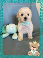 Maltipoo Puppies for sale in Tracy, CA, USA. price: NA