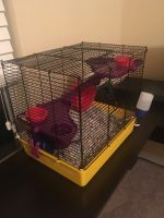 Mice Rodents for sale in D'Iberville, MS, USA. price: NA