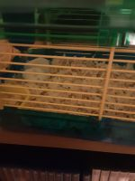 Mice Rodents for sale in Hornell, NY 14843, USA. price: NA
