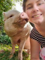 Mini/Micro Pig Animals for sale in Gadsden, AL, USA. price: NA