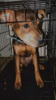 Miniature Pinscher Puppies for sale in Beaufort, SC, USA. price: NA