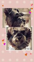 Miniature Schnauzer Puppies for sale in Lancaster, CA, USA. price: NA