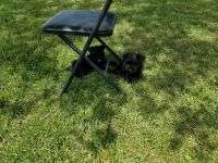 Miniature Schnauzer Puppies for sale in Bedford, IN 47421, USA. price: NA