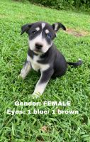 Mixed Puppies for sale in Rome, GA, USA. price: NA