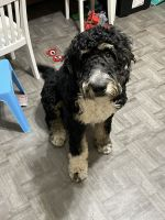 Mixed Puppies for sale in Pennsauken Township, NJ 08109, USA. price: NA