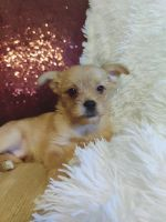 Mixed Puppies for sale in Novato, CA 94945, USA. price: NA
