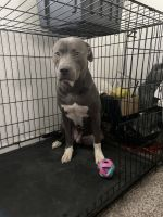 Mixed Puppies for sale in 3513 Robins Landing Way, Decatur, GA 30032, USA. price: NA