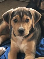 Mixed Puppies for sale in Tyler, TX, USA. price: NA