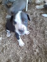 Mixed Puppies for sale in Amery, WI 54001, USA. price: NA