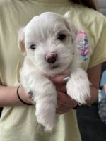 Mixed Puppies for sale in Evans, GA, USA. price: NA
