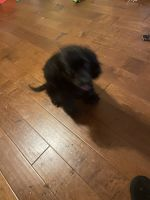 Mixed Puppies for sale in 2971 N Main St, Walnut Creek, CA 94597, USA. price: NA