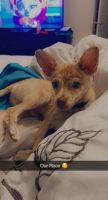 Mixed Puppies for sale in Phoenix, AZ 85019, USA. price: NA