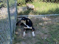 Mixed Puppies for sale in Nebraska City, NE 68410, USA. price: NA