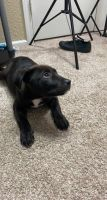Mixed Puppies for sale in Overland Park, KS 66224, USA. price: NA