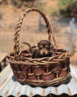Mixed Puppies for sale in Orofino, ID 83544, USA. price: NA